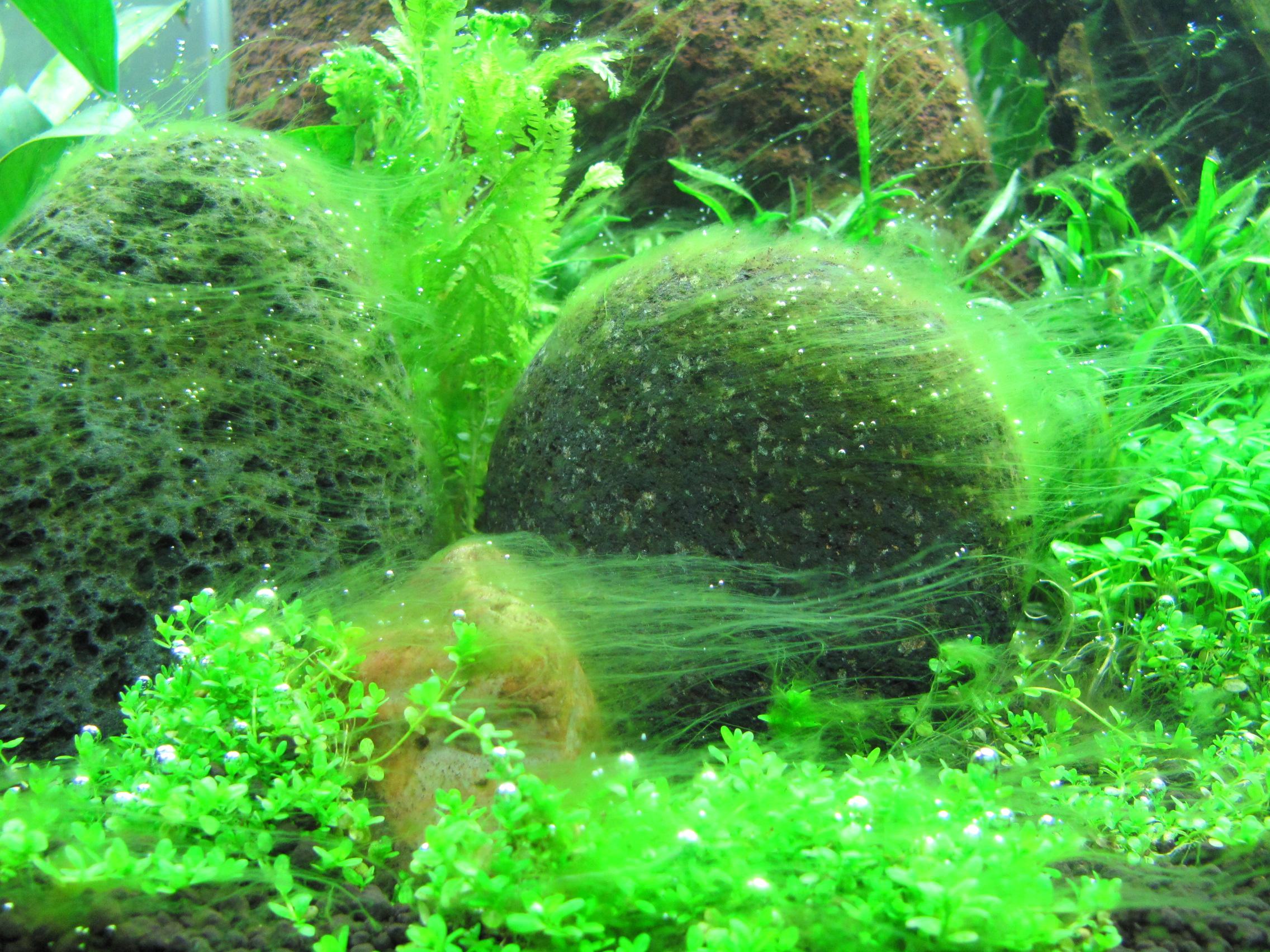 nature aquarium , planted aquarium